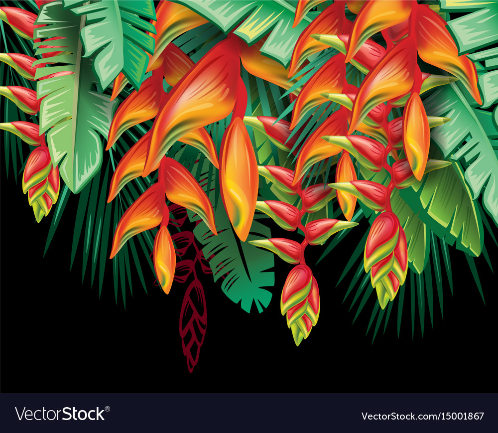 Tropical plants heliconia and flowers vector image