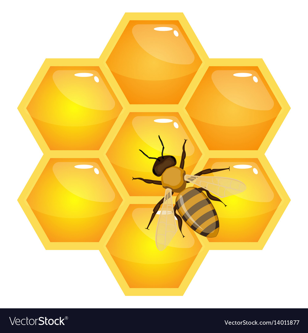 Bee on honeycombs isolated on white background