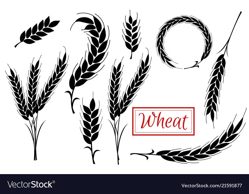 Set wheat ears icons and logo organic wheat