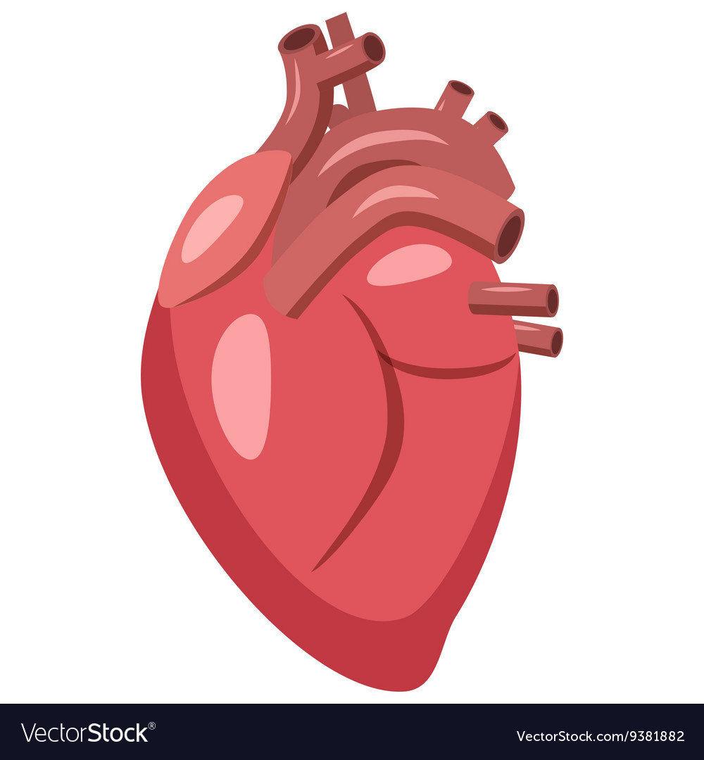 Human Heart Icon Cartoon Style Royalty Free Vector Image