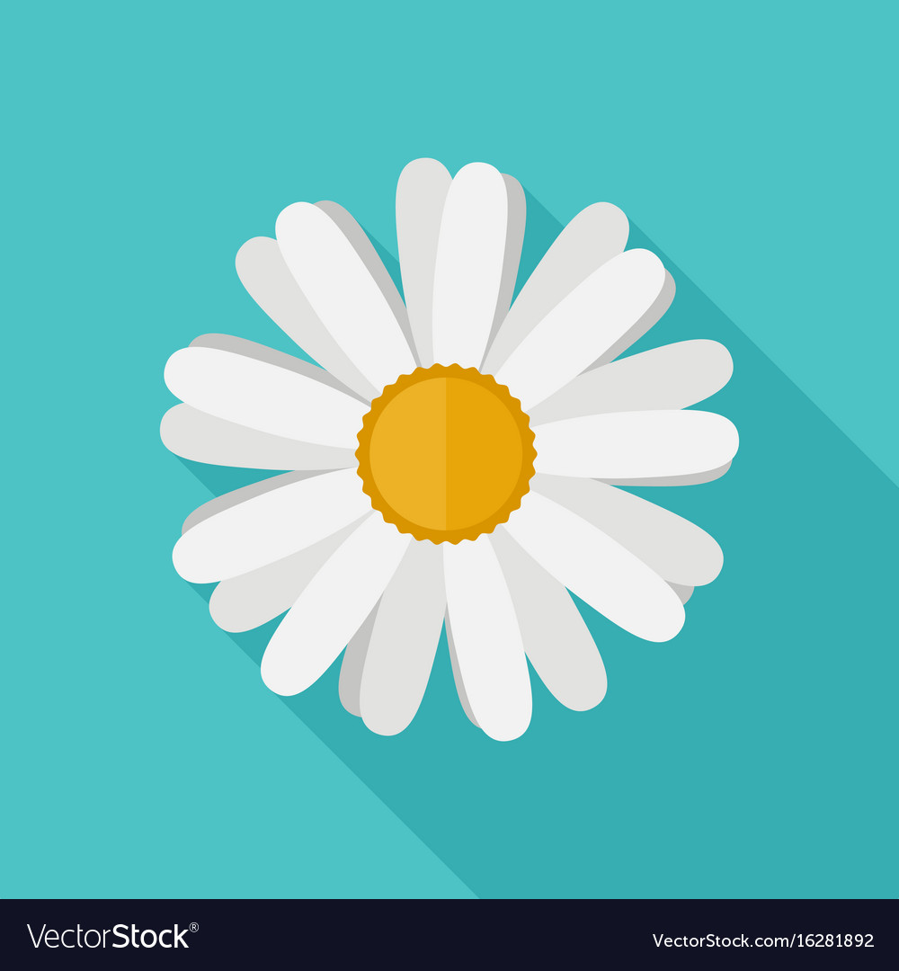 Daisy Flower Flat Icon Royalty Free Vector Image