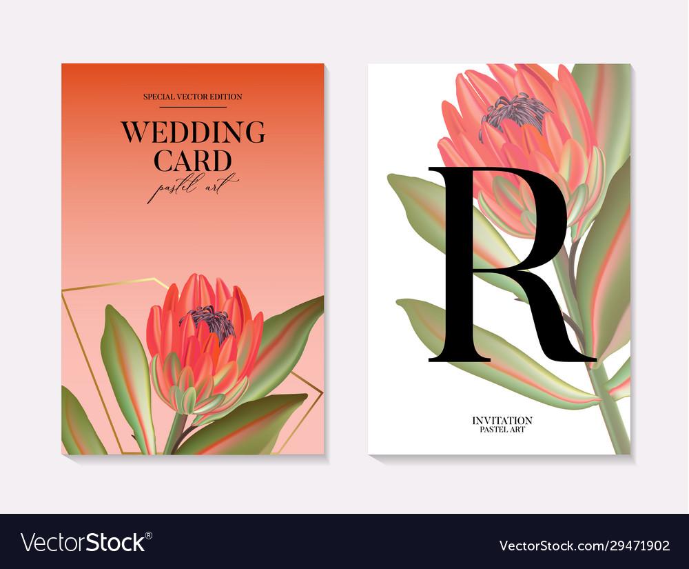 Macro protea realistic flower hand-drawn
