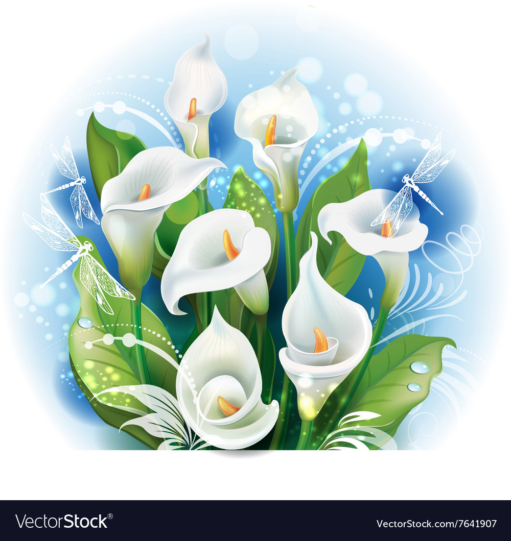 Bouquet Of White Calla Lilies Royalty Free Vector Image