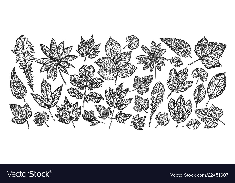 Decorative leaves and grass nature concept