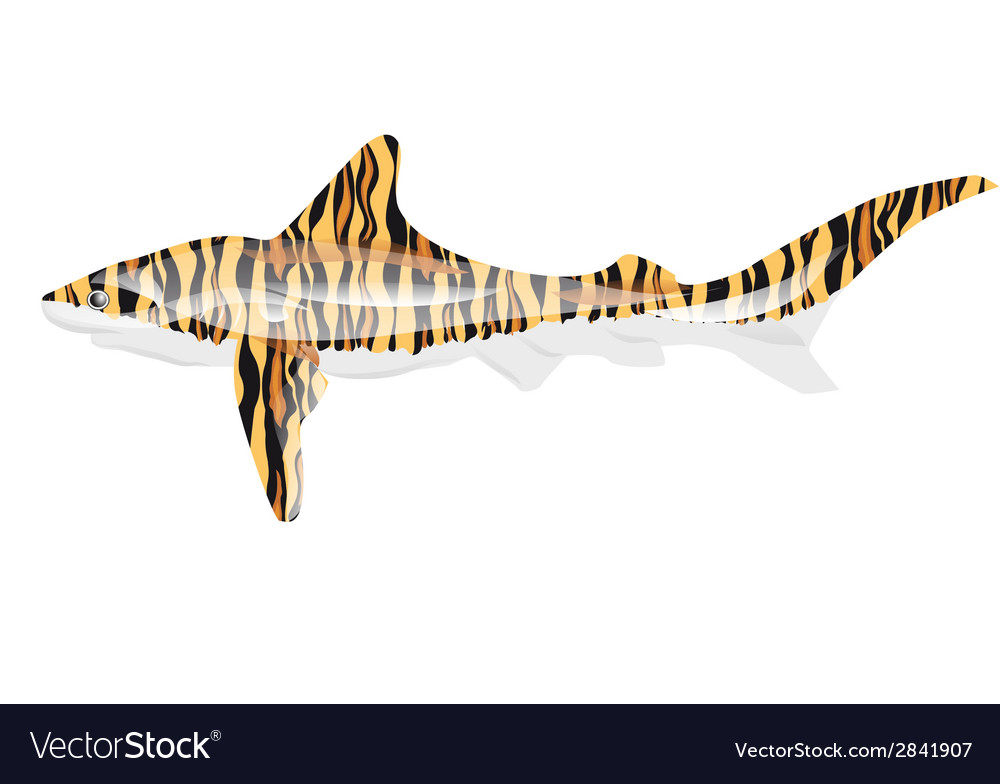 Tiger shark vector image