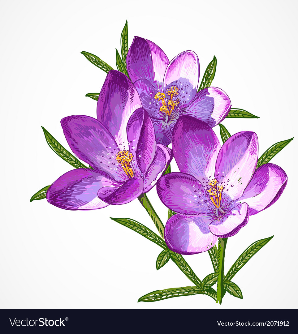 Crocus spring flowers for your design royalty free vector crocus spring flowers for your design vector image mightylinksfo