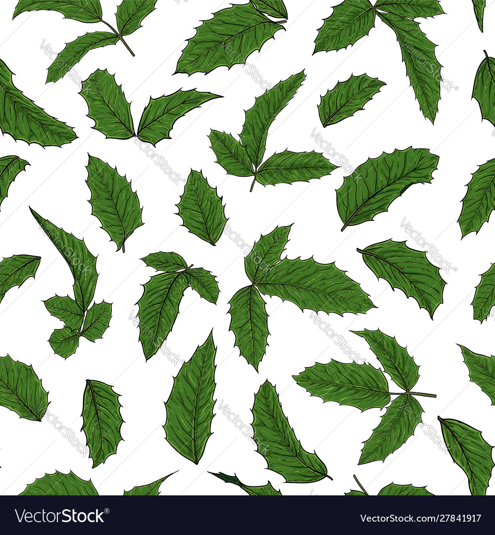 Seamless pattern holly ilex branch with berry and