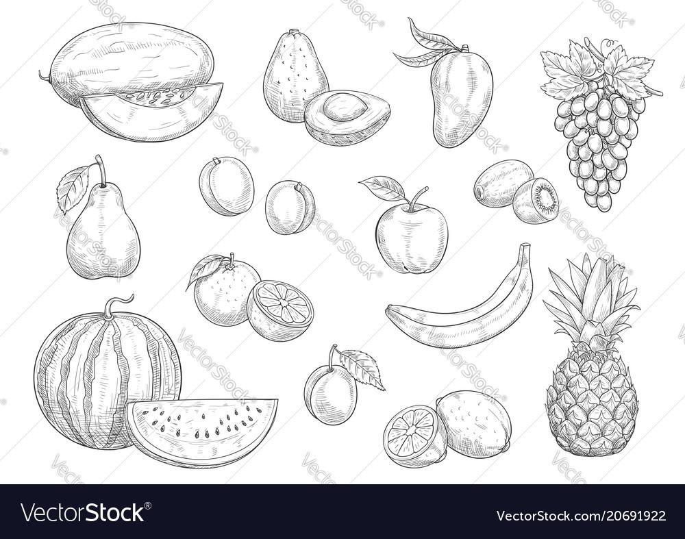 Fruit isolated sketch set for food juice design