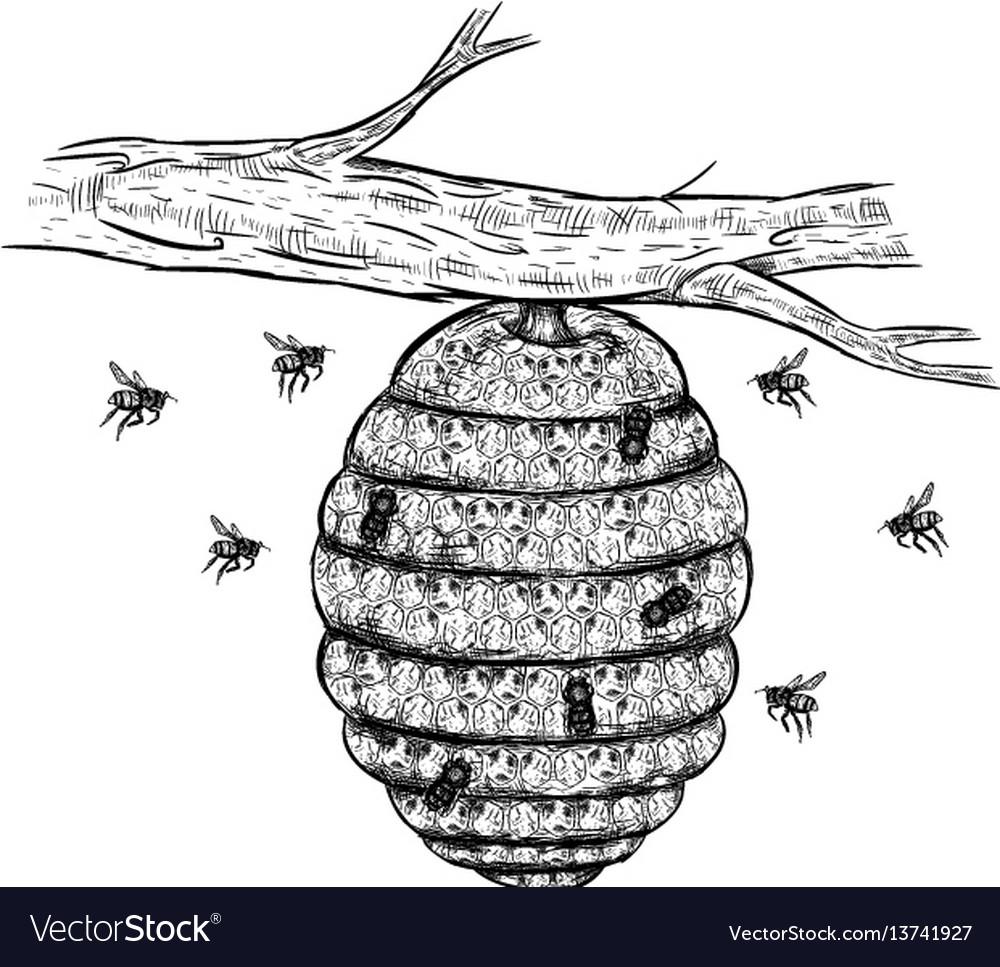Sketch of beehive