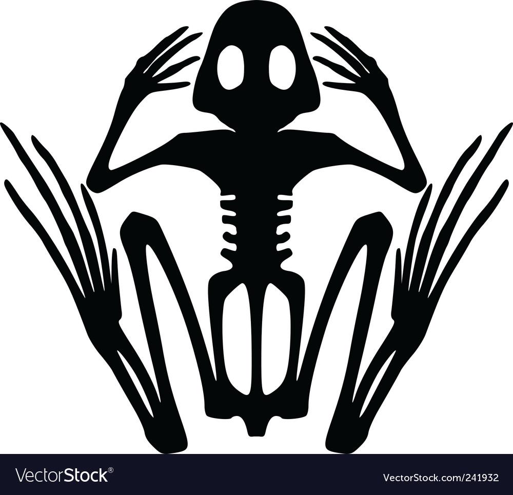 frog skeleton royalty free vector image vectorstock rh vectorstock com Vector The Crocodile Cute Frog Silhouette