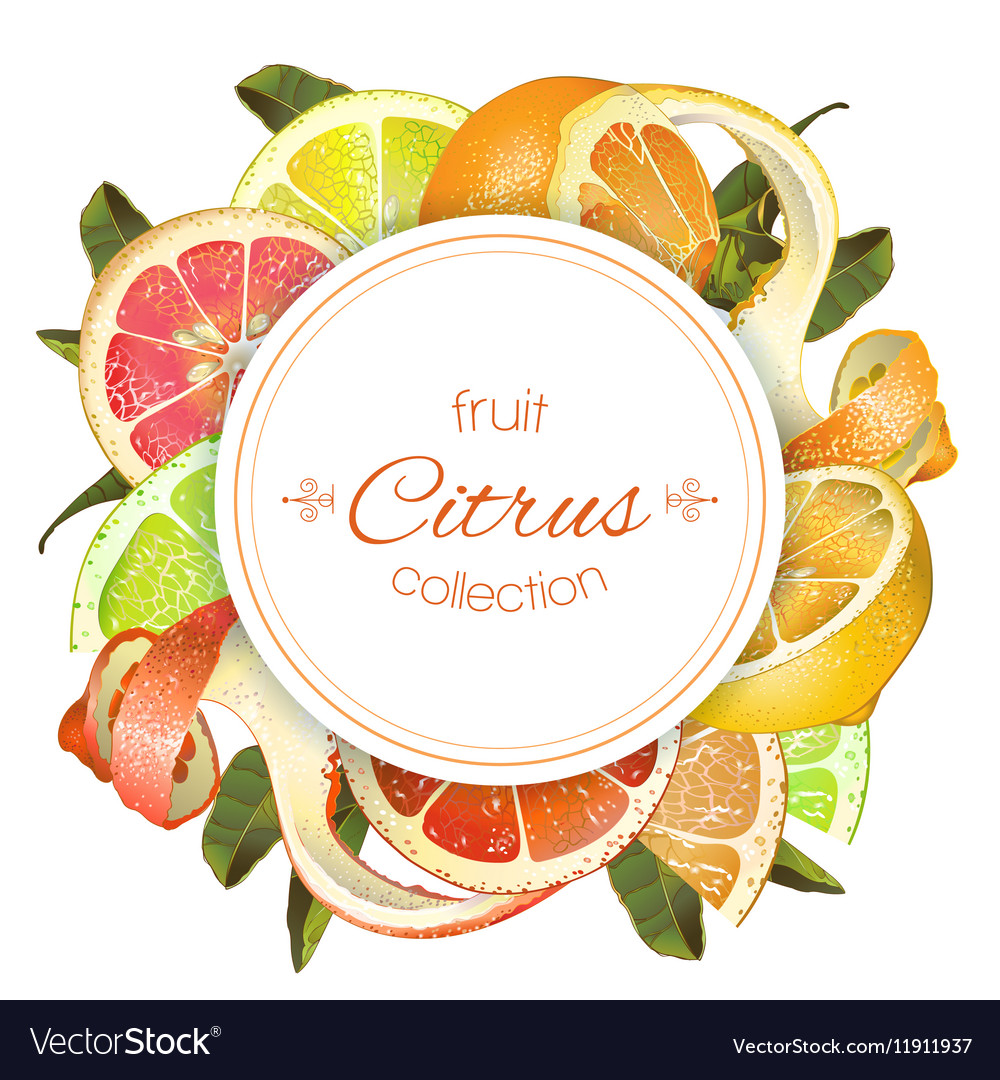 Citrus round banner vector image