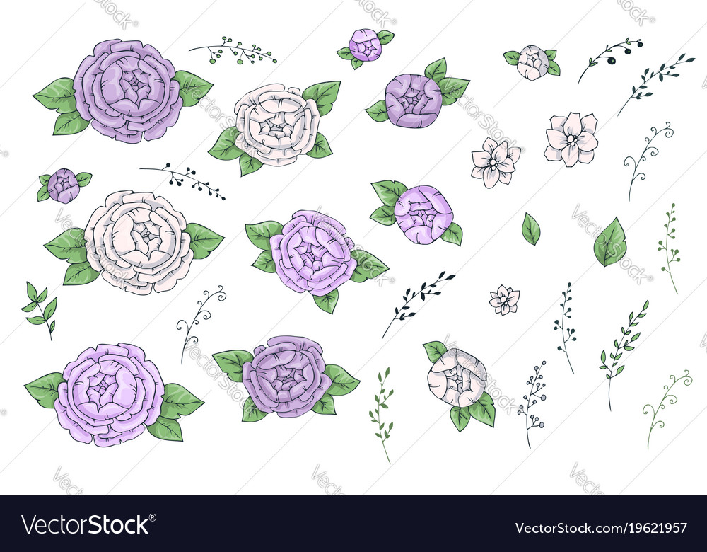 Romantic peonies high quality botanical vector image