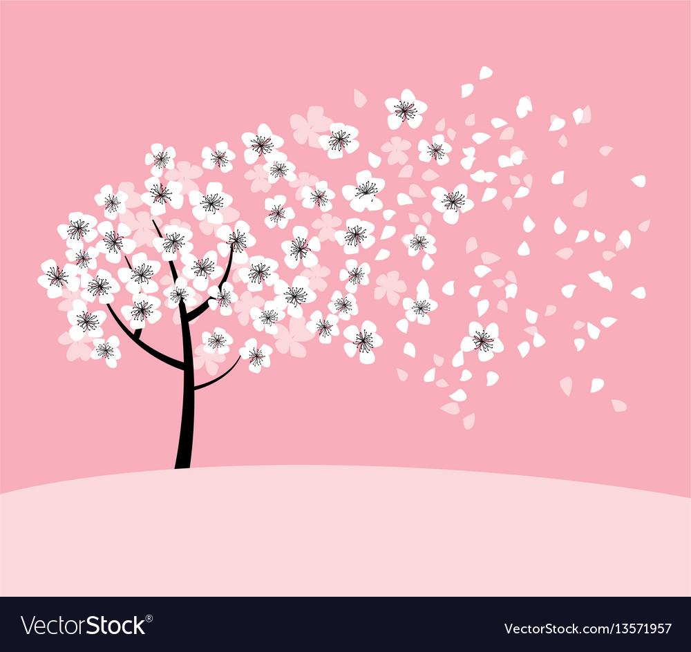 White sakura tree blossom on pink rosy background