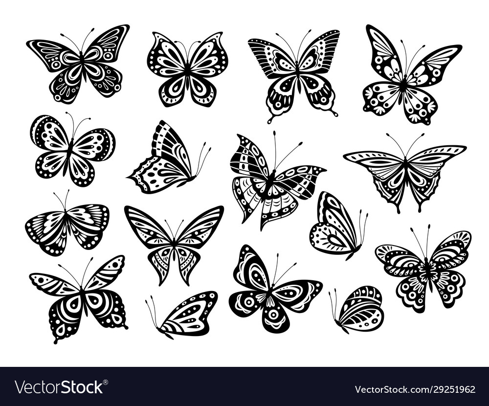 Black butterflies drawing butterfly silhouette