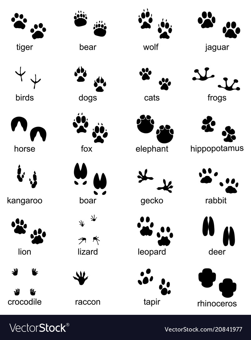 Footprints of wild animals vector image