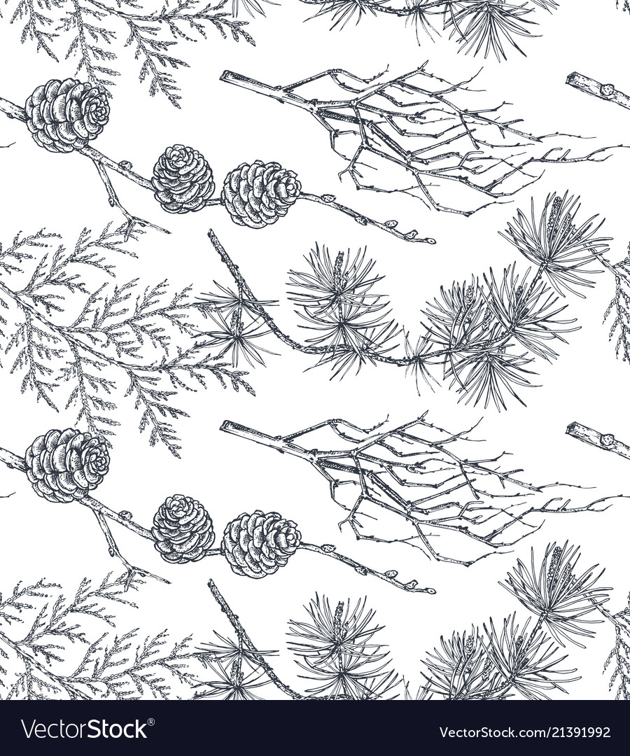 Background with hand drawn conifers trees