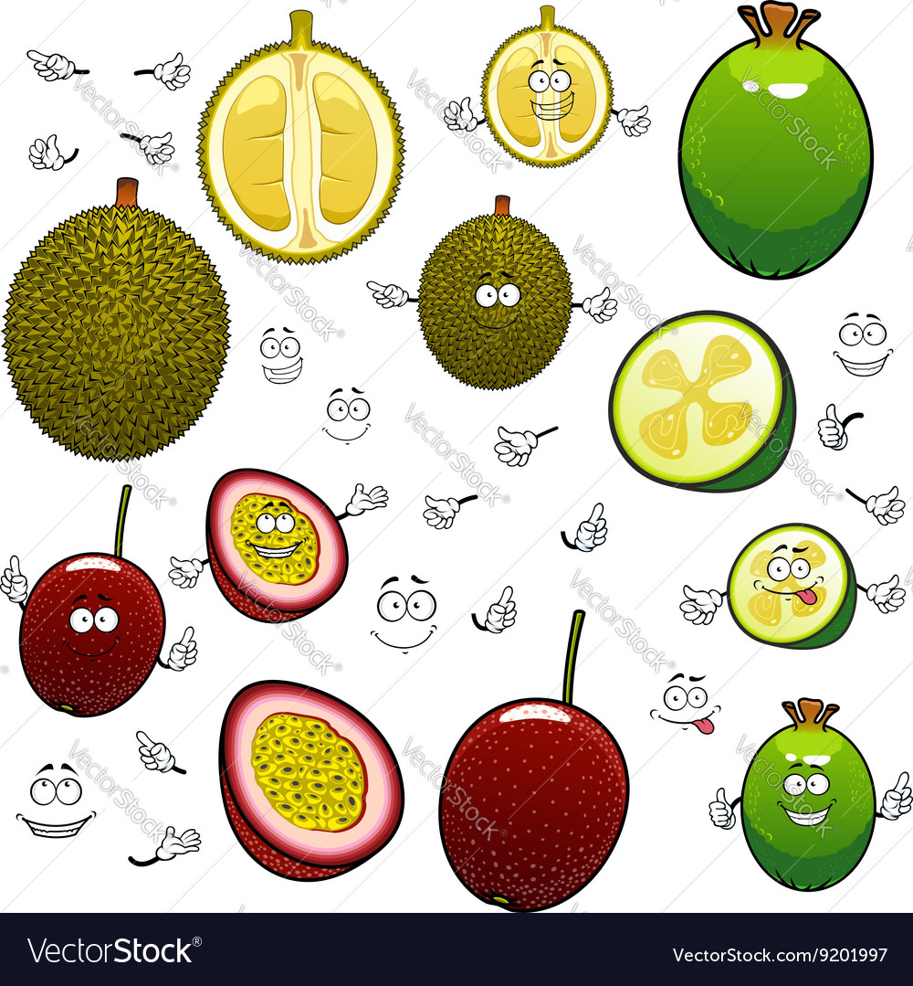 Exotic cartoon feijoa durian and maracuya fruits