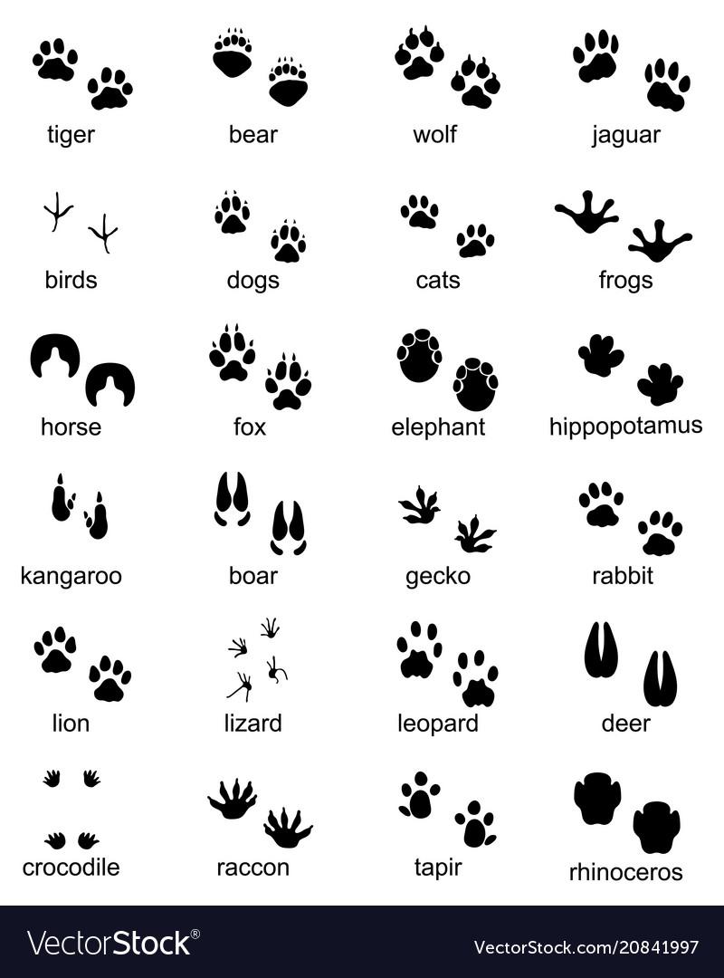 Footprints wild animals