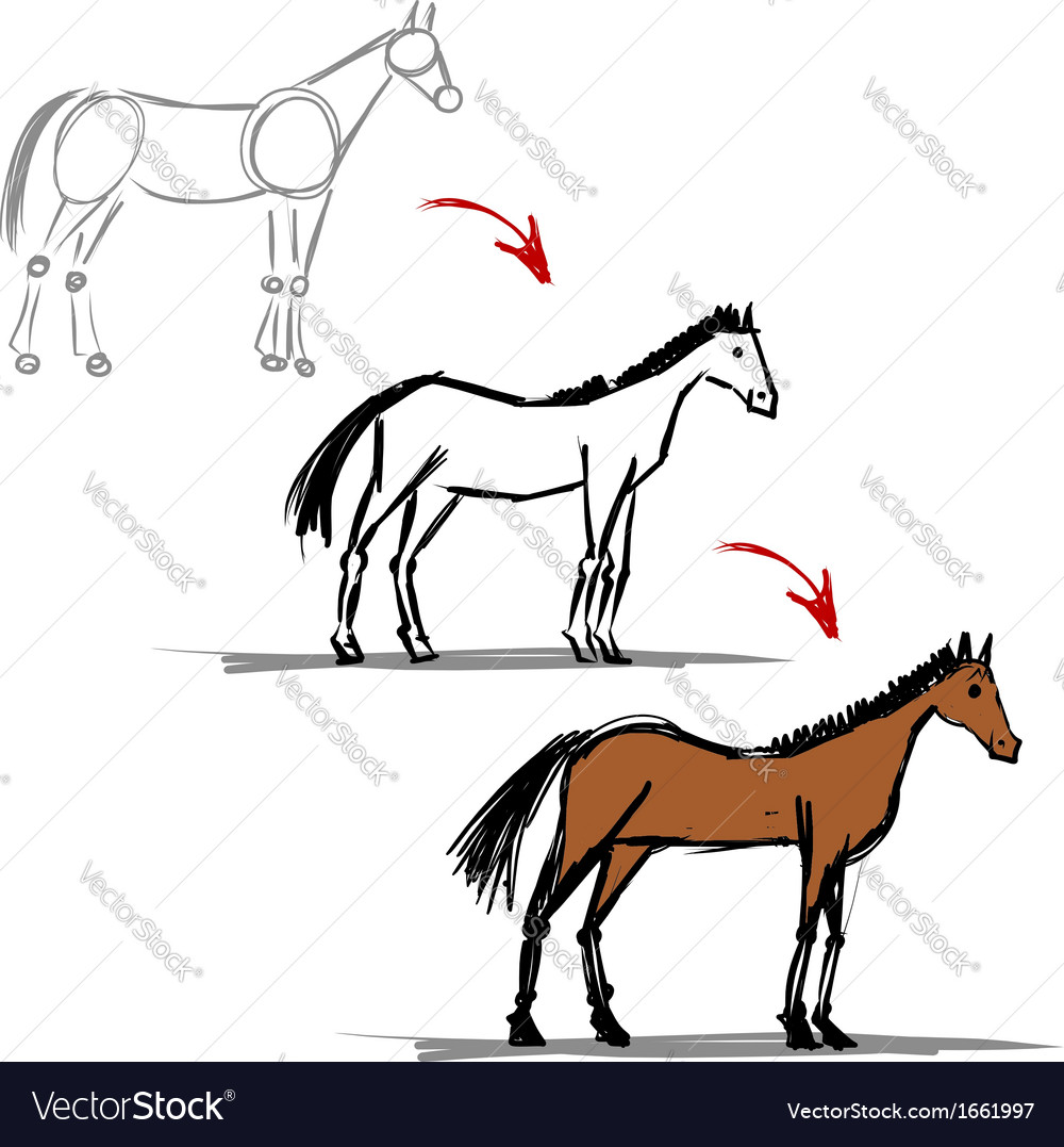 Stages of drawing horse sketch for your design