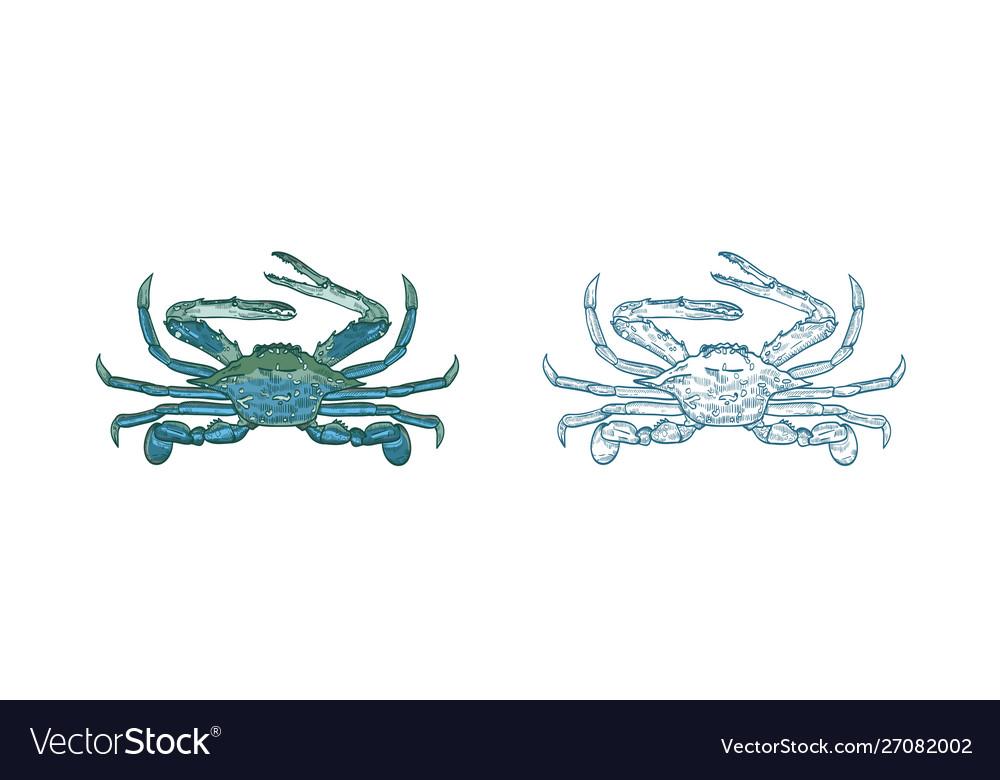 Ocean blue crab set colorful