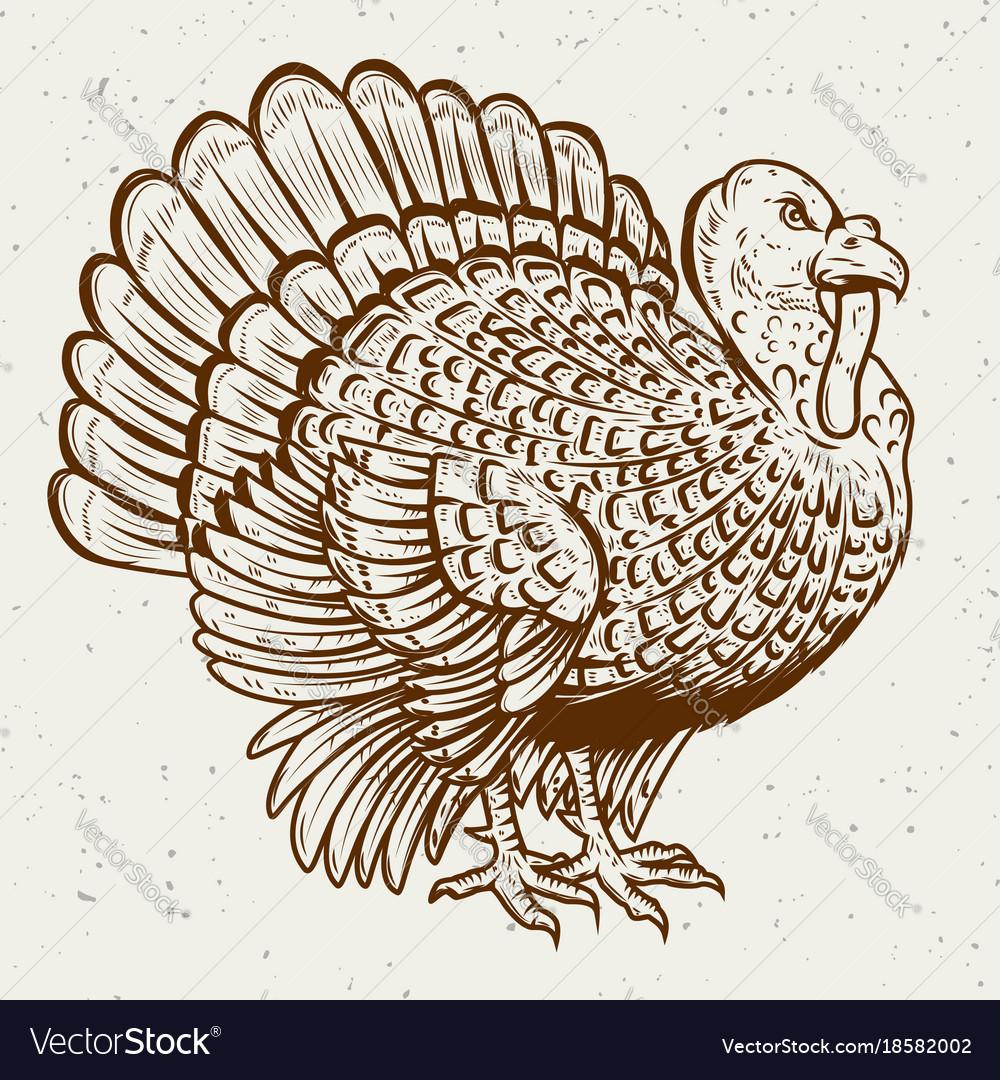 Turkey on white background thanksgiving theme