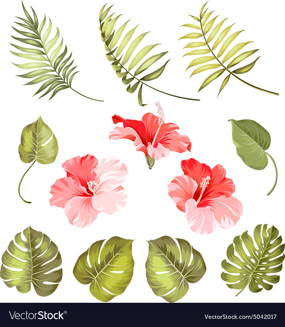 hibiscus single tropical flower royalty free vector image rh vectorstock com tropical flower vector free download tropical flower vector pattern free
