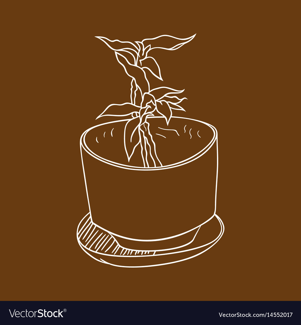 Plant in the pot 2 vector image