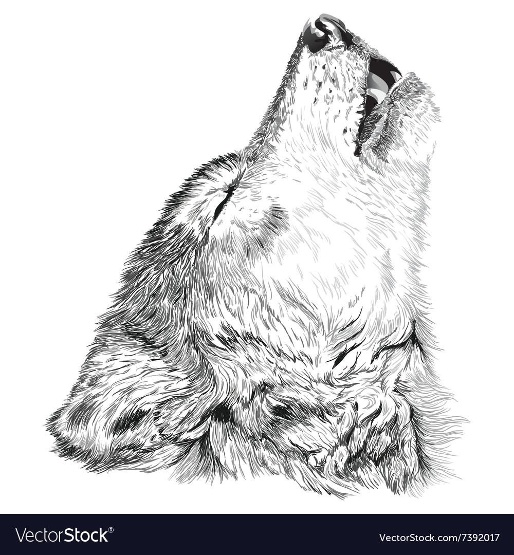 Wolf Howls Sketch Royalty Free Vector Image Vectorstock