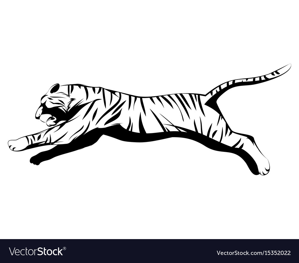 Big tiger jumping