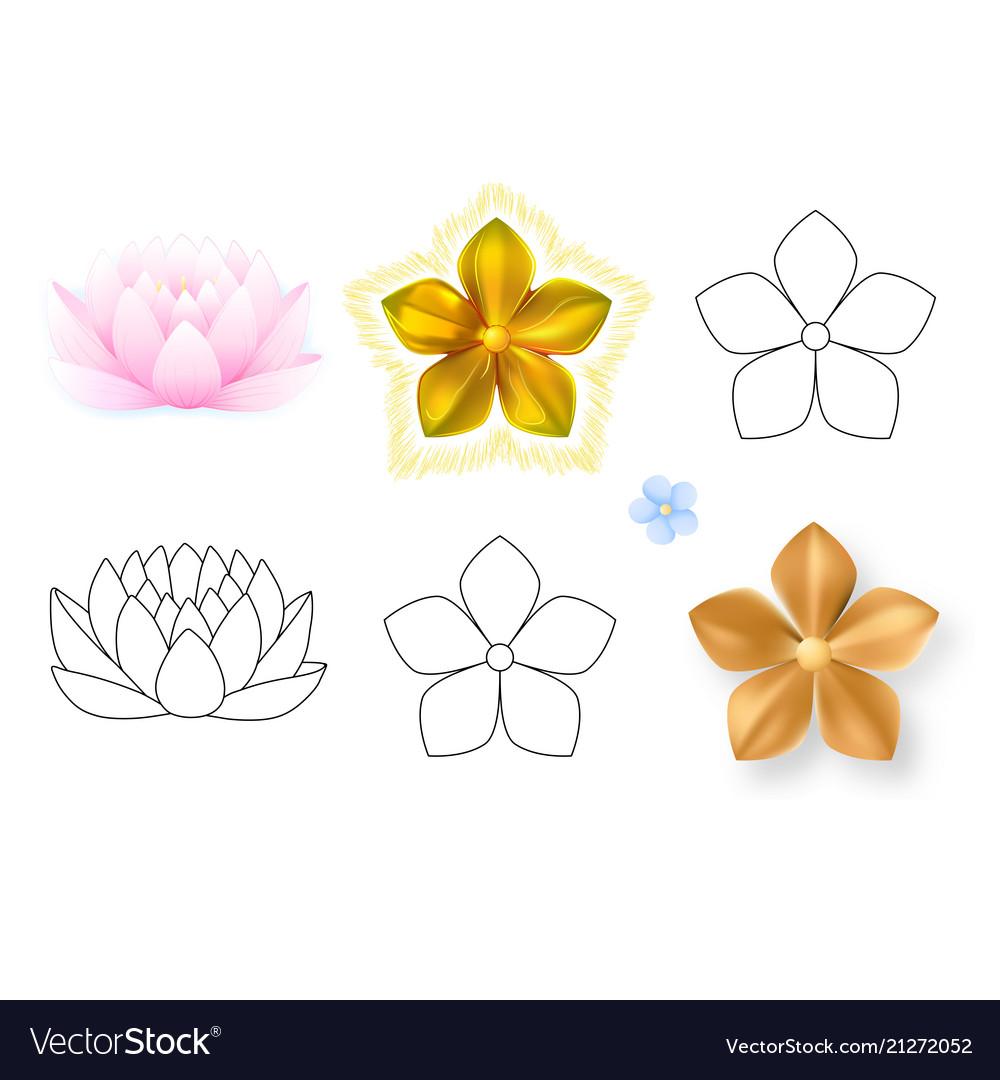 Pink Lotus Forget Me Not Pattern Flower Set Vector Image