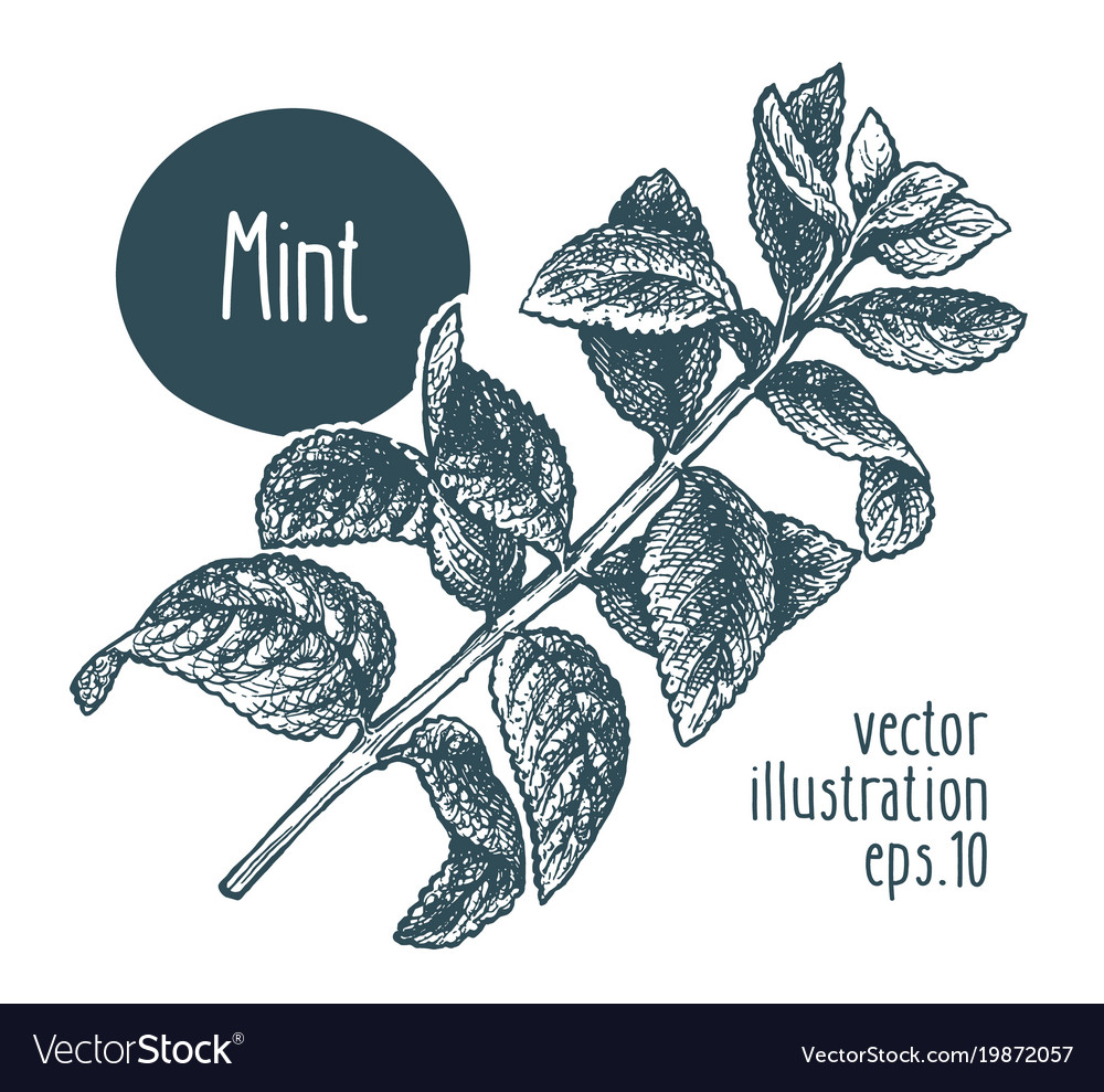 Mint branch for design menu