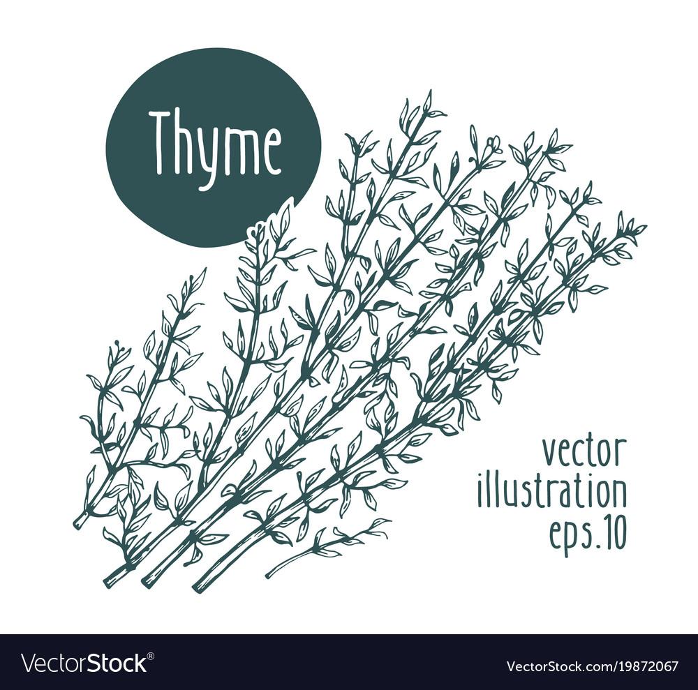 Thyme branch for design menu