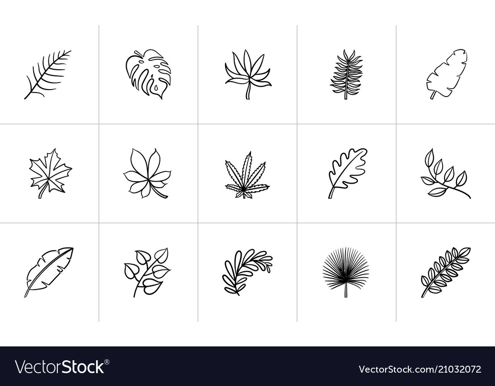 Leaves of plants and trees sketch icon set