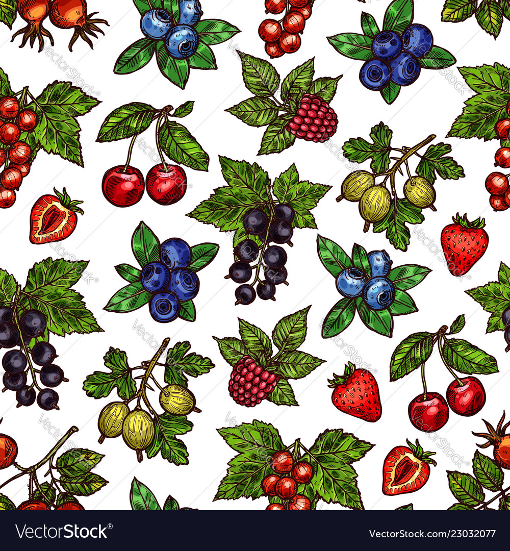 Seamless pattern of berries with leaves sketches