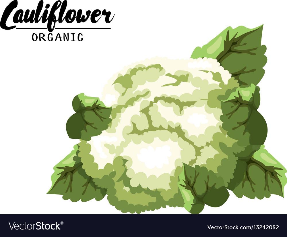 Cartoon cauliflower ripe green vegetable