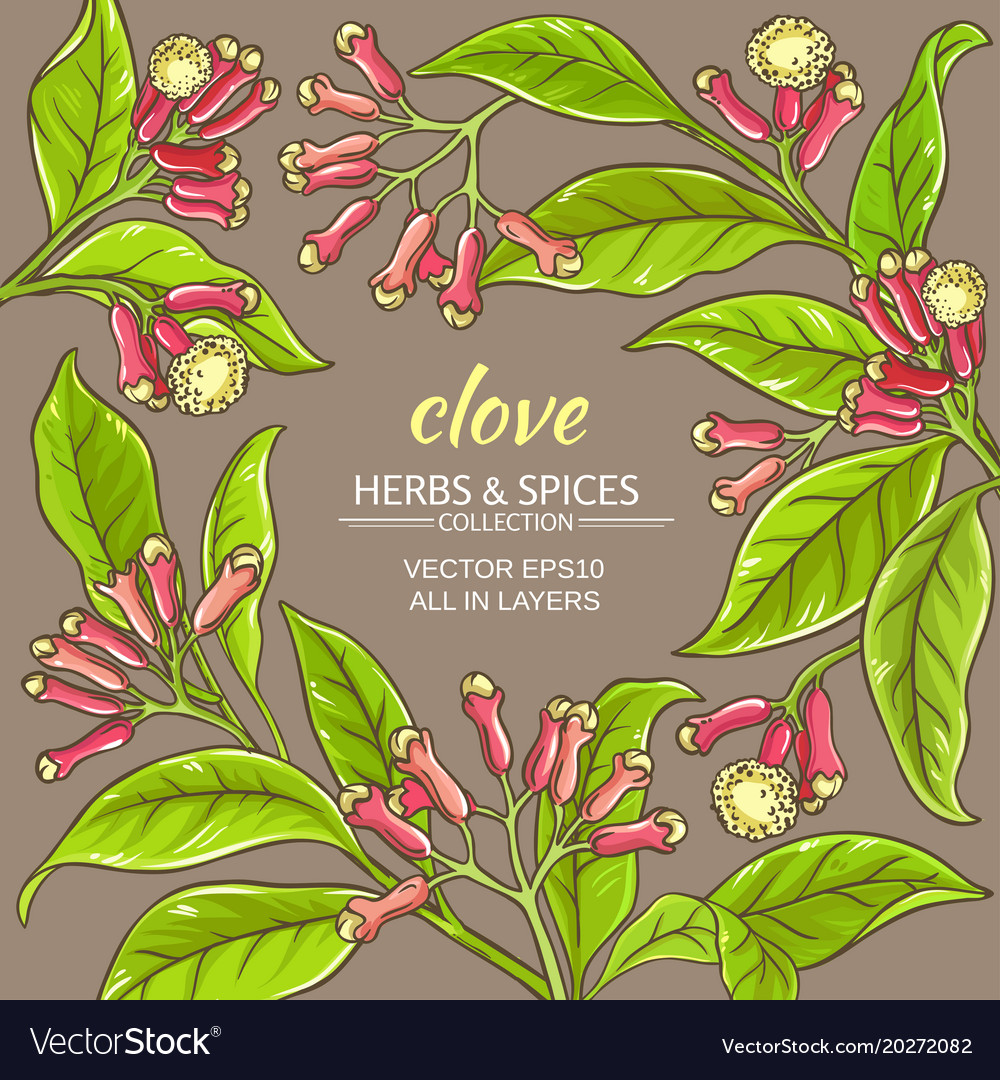 Clove Frame Royalty Free Vector Image Vectorstock
