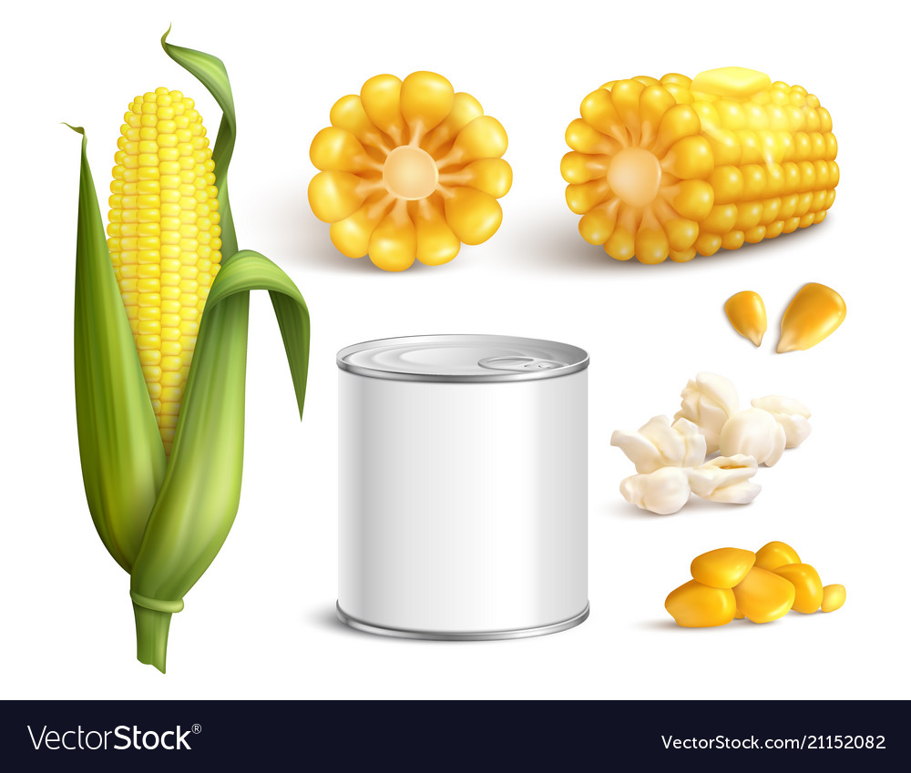 Corn realistic set