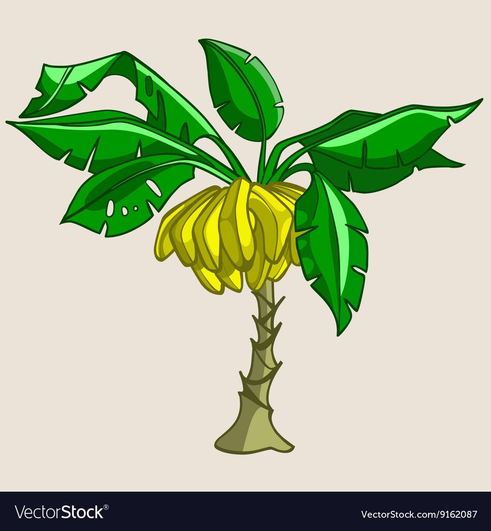 Cartoon Banana Tree With Bananas Royalty Free Vector Image