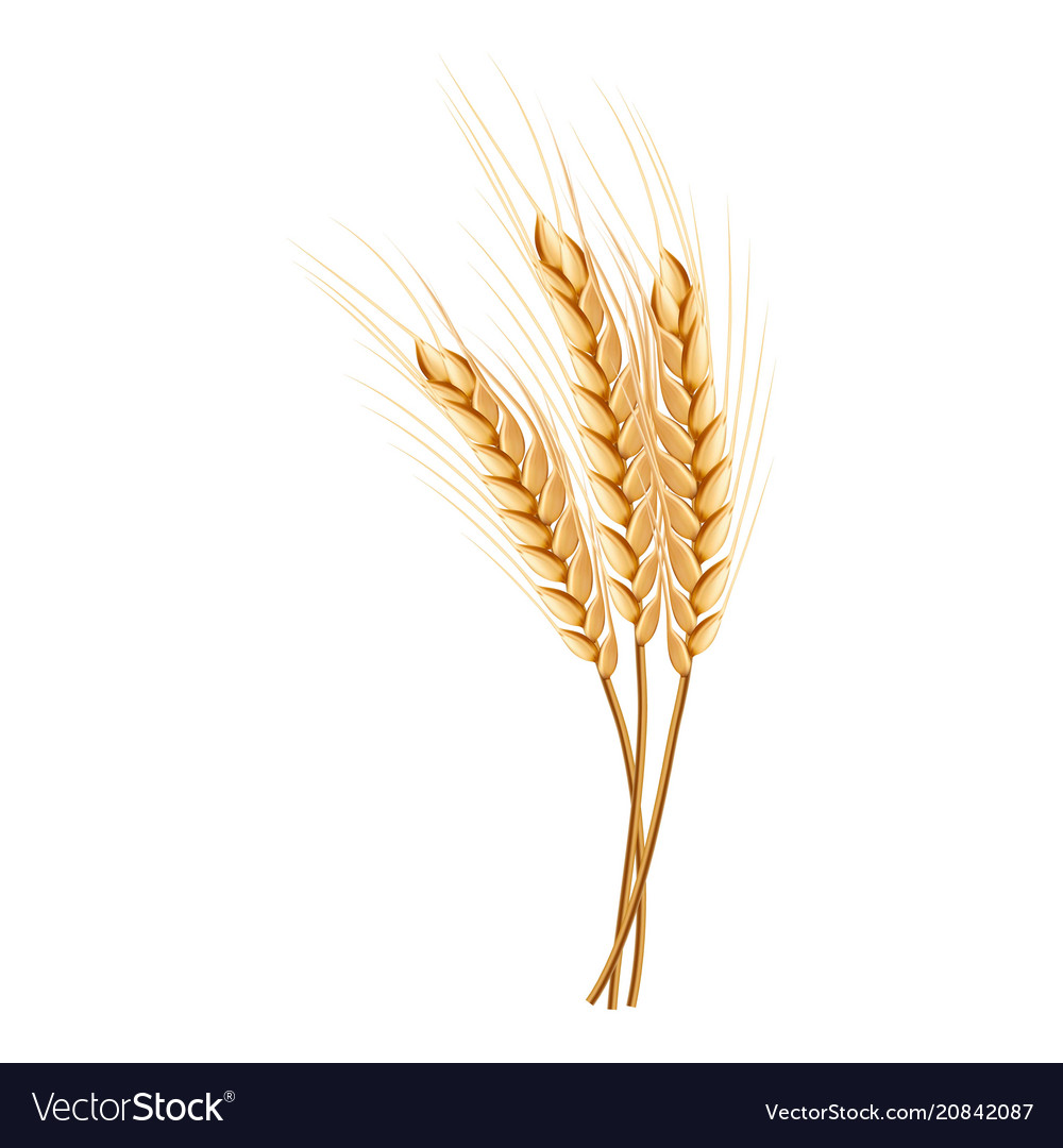 Eco wheat icon realistic style