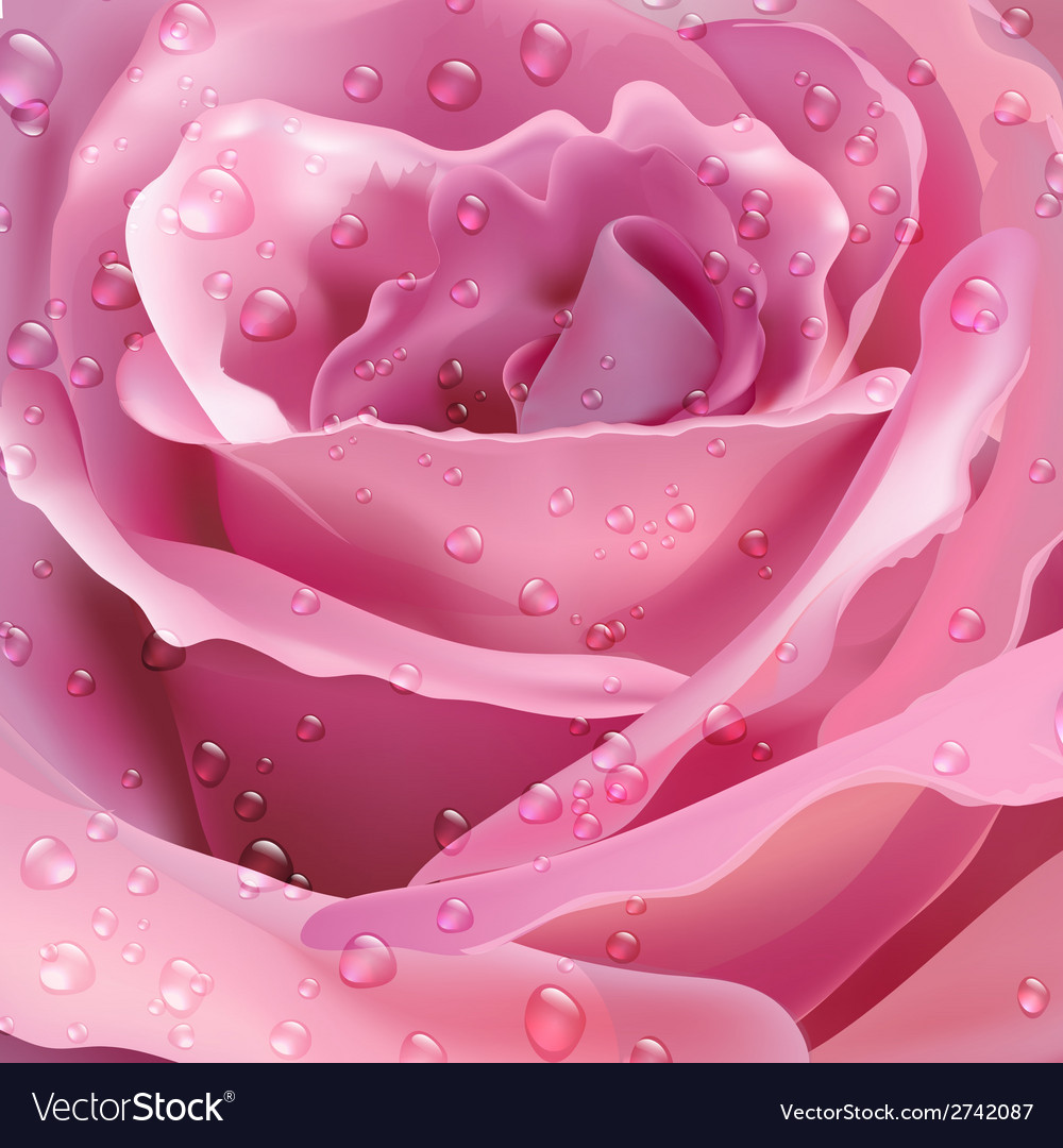 Rose background for your design