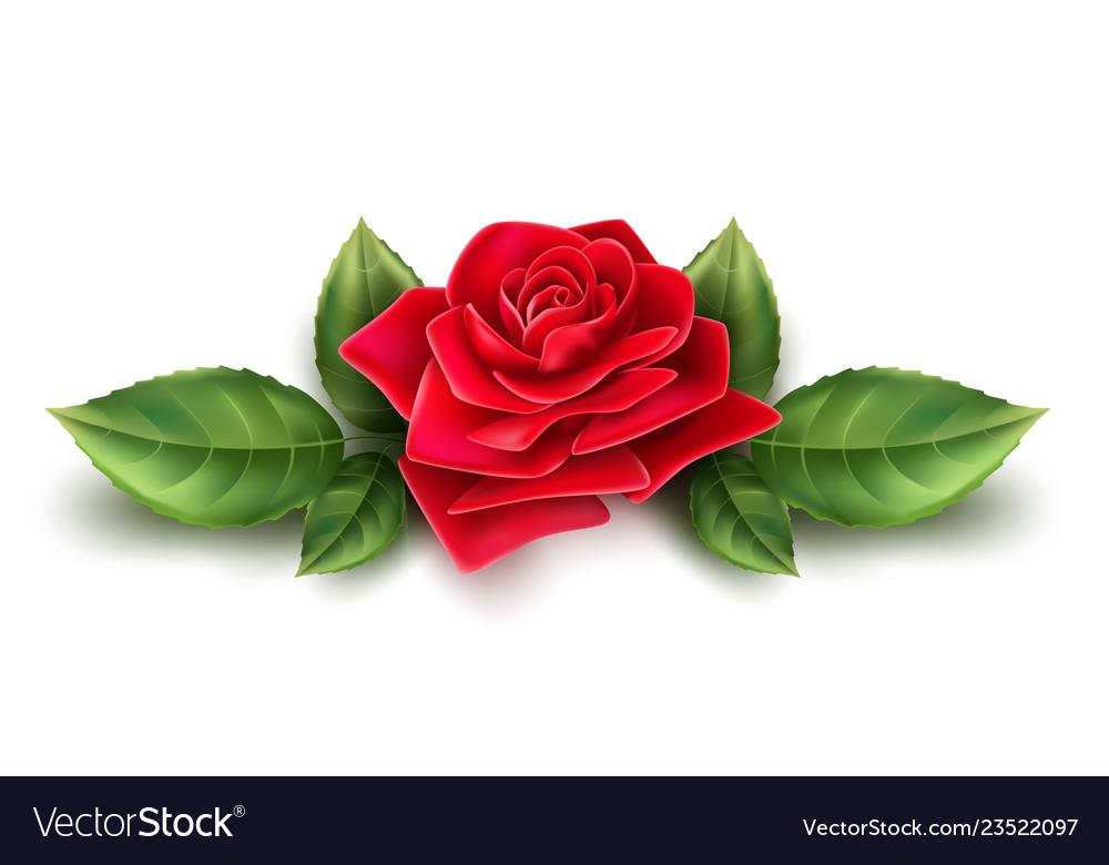 Realistic red rose blossom leaf stem set