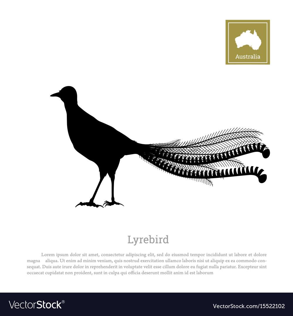 Black silhouette of lyrebird animals of australia vector image