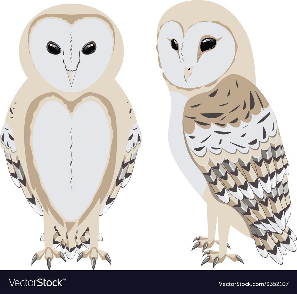 Cartoon Barn Owl vector image