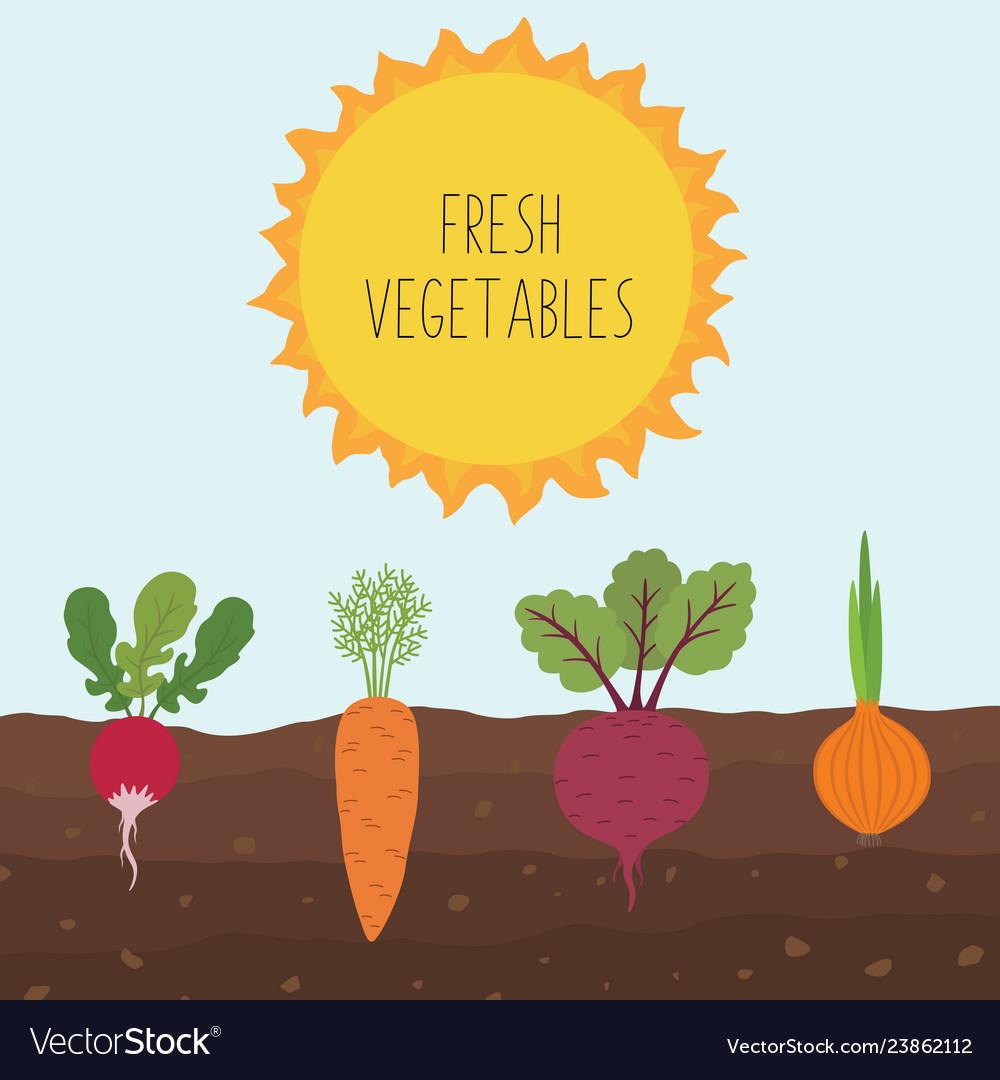Fresh organic vegetable garden on blue sky