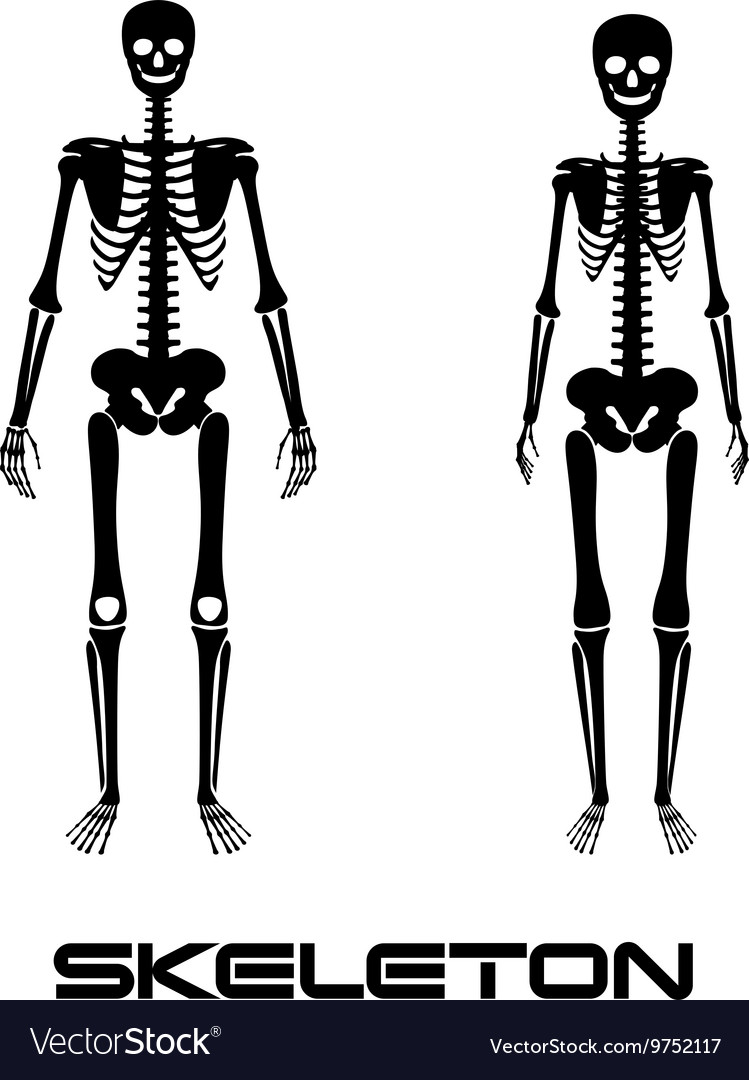 Male And Female Skeleton Silhouettes Royalty Free Vector
