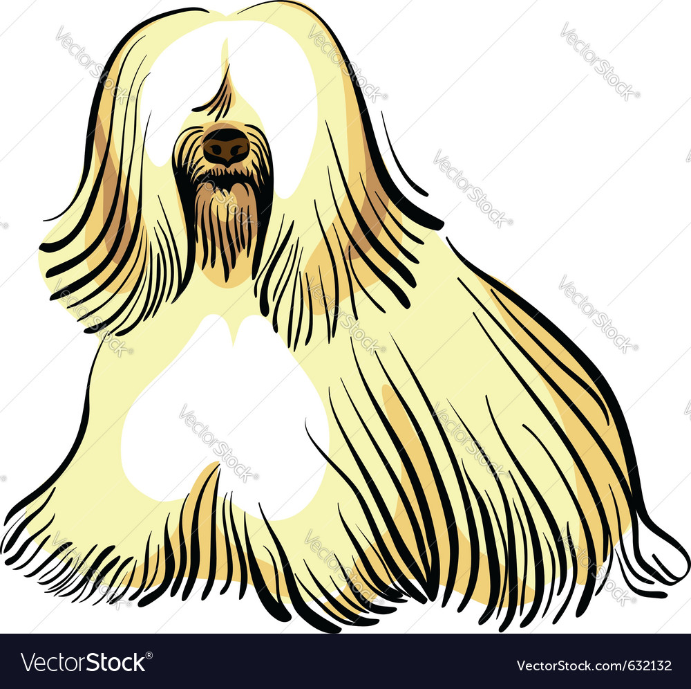 Color sketch of the dog tibetan terrier breed sitt vector image