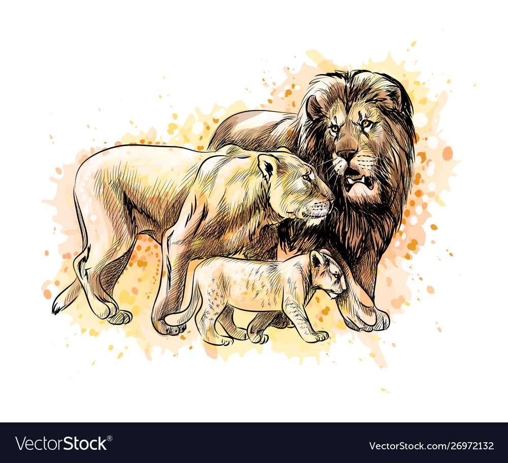 Family lions from a splash watercolor