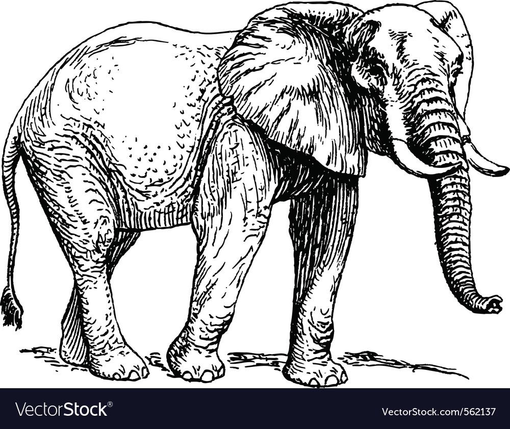 elephant royalty free vector image vectorstock rh vectorstock com elephant vector eps elephant vector art