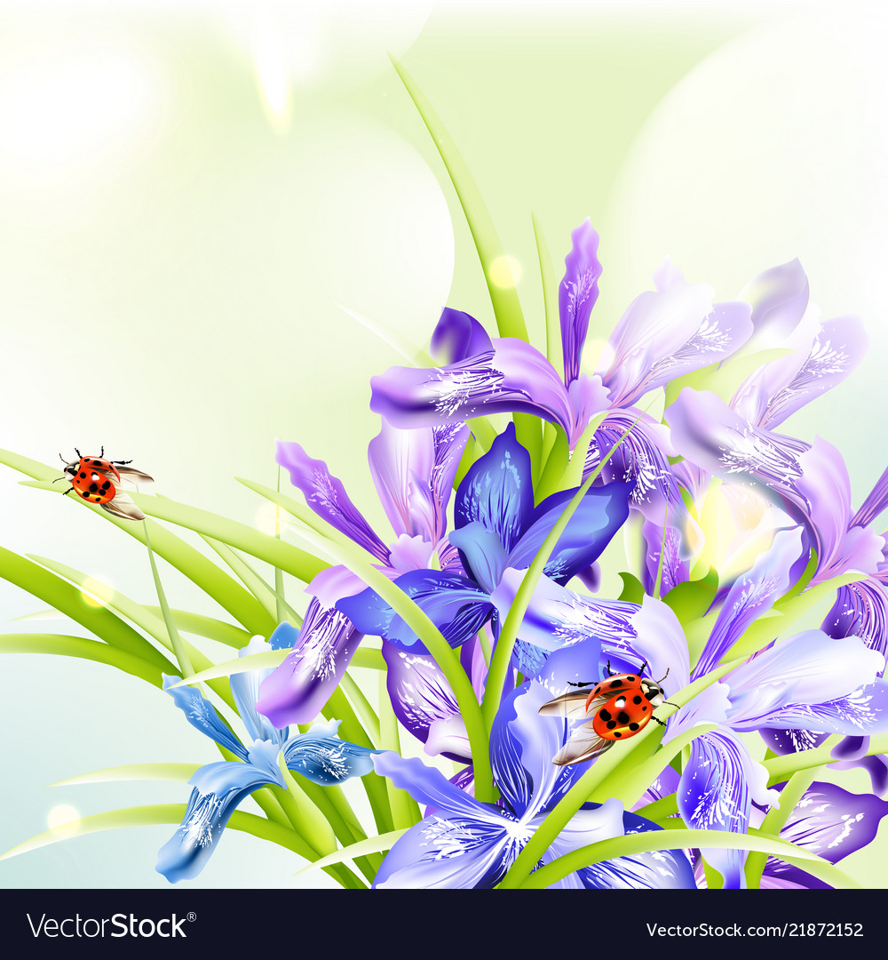 Beautiful spring background with iris flowers