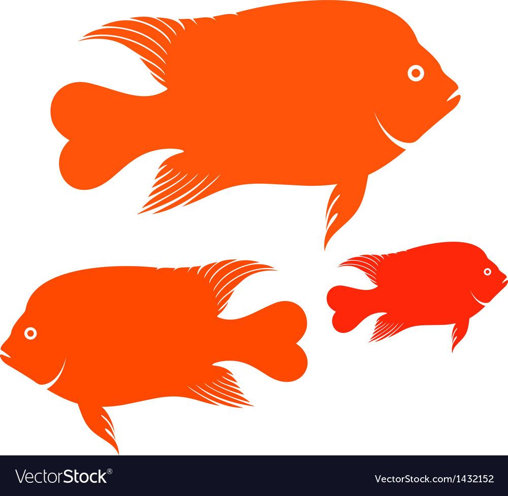 Garibaldi Fish Royalty Free Vector Image - VectorStock
